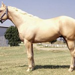 Different Breeds of Horses: An Introduction
