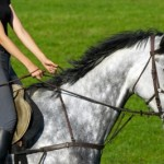 Beginner Horse Riding Lessons: What You Can Expect