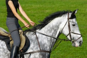 beginner horse riding lessons