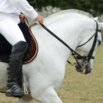 Intermediate Horse Riding Lessons: What You Can Expect