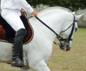 intermediate horse riding lessons