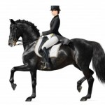 Dressage: What You Need to Know