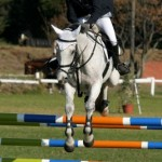Show-Jumping: What You Need to Know