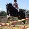 horse and rider_small jump