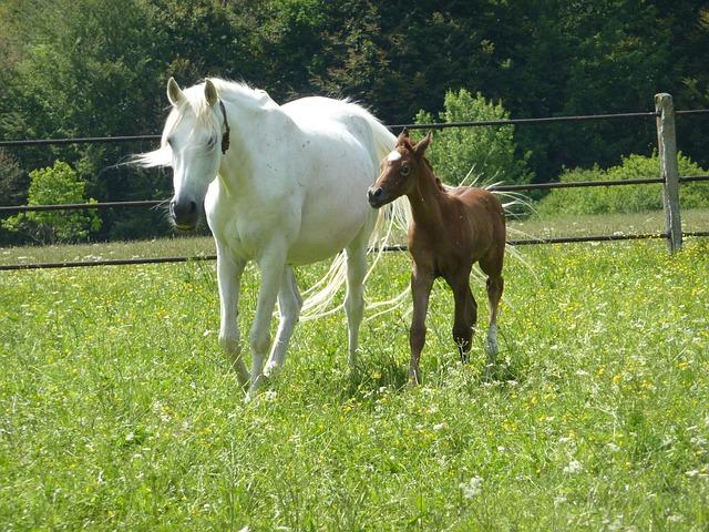 horse-83543_640